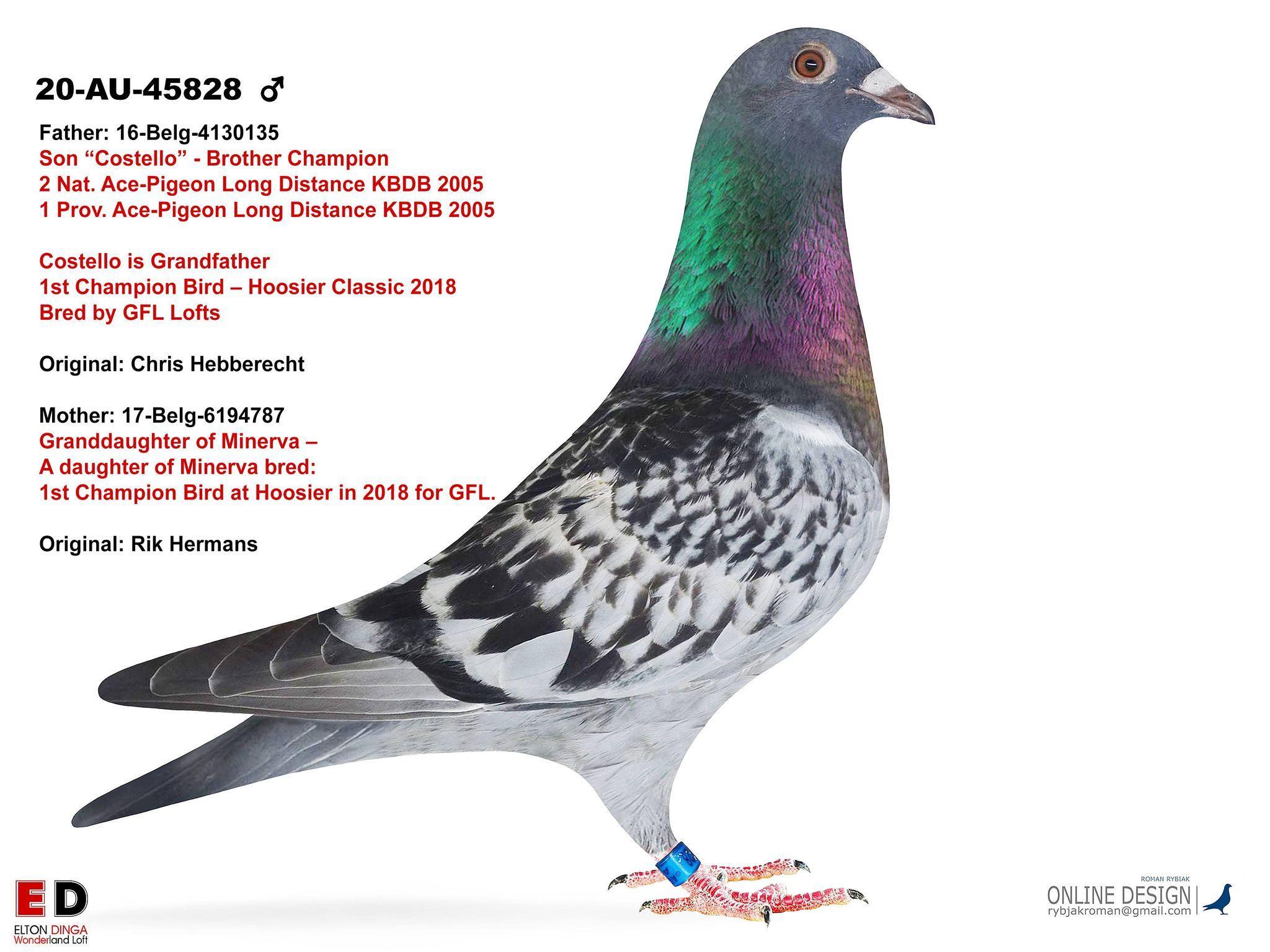 Cousin to Champion Bird - Hoosier 2018 for GFL 45828 - Cock