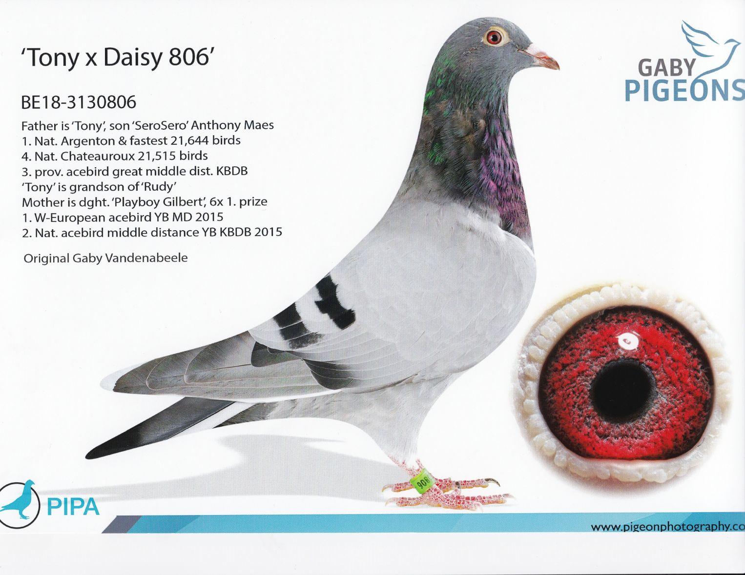 Belg 18 3130806  Gaby Direct!
