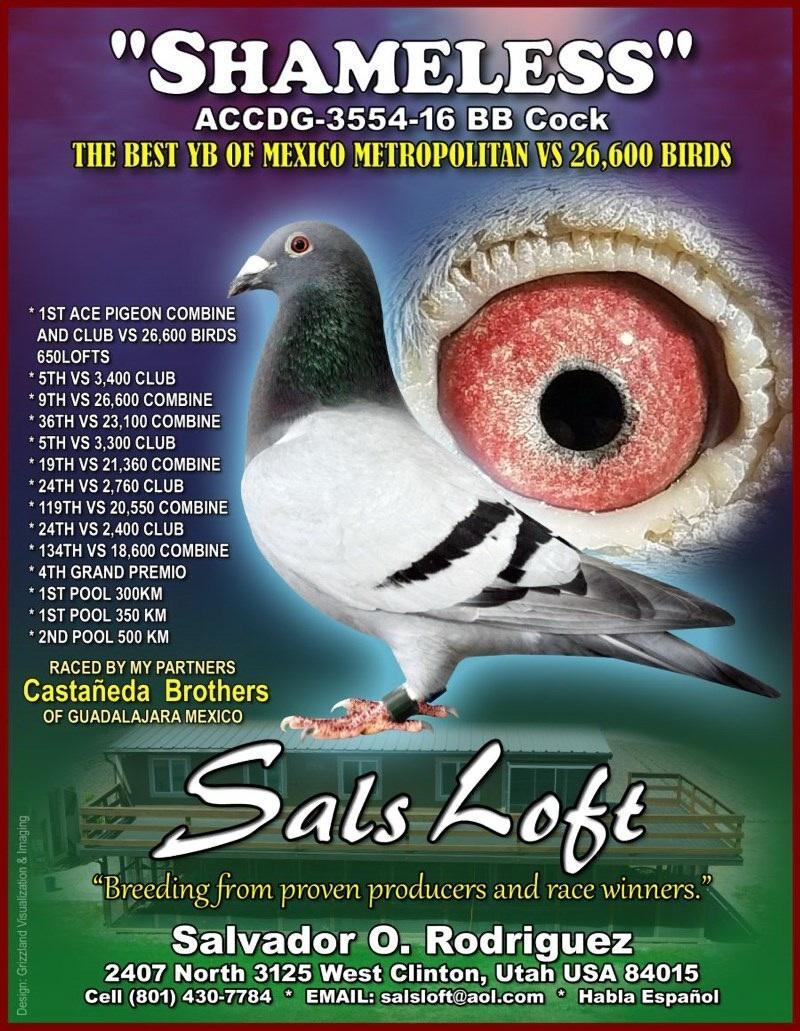 Sal's Loft Performance Pigeons