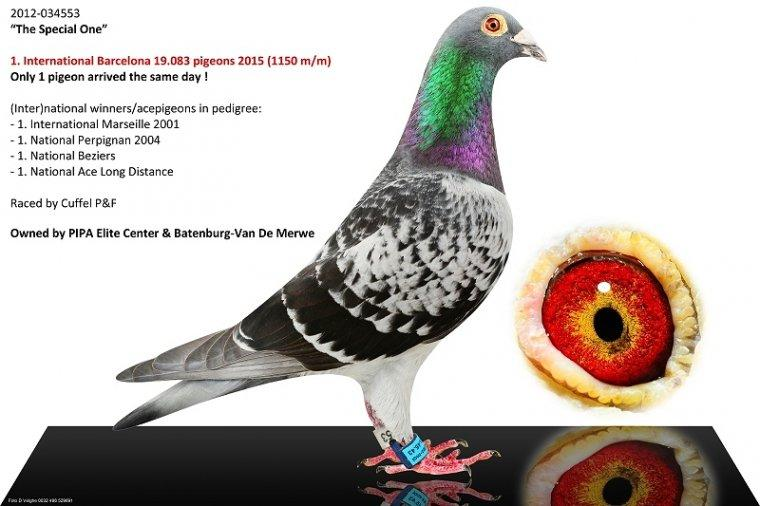 'Special One' Only Day Bird Barcelona