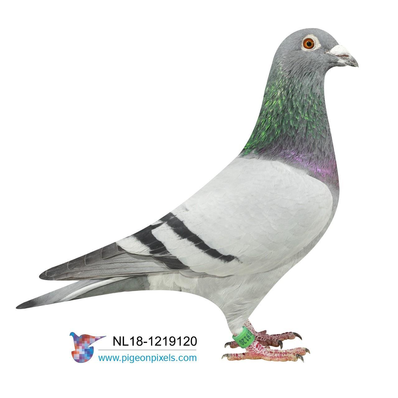 NL18 1219120 - 100% GEBR. JANSSEN