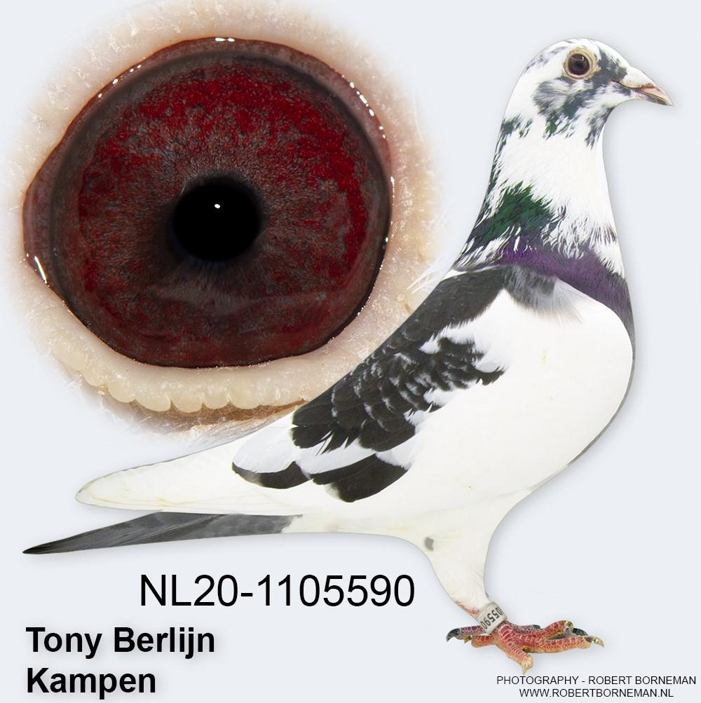 """NL20 1105590 - """"BLACK WHITE SPECIAL ONE"""""""